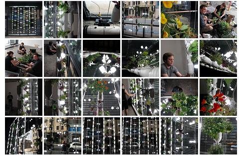 Windowgardens3