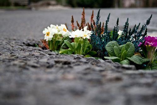 Pothole_garden_01-2
